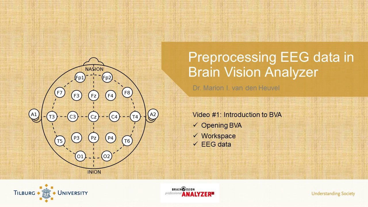 brain vision analyzer 2 manual